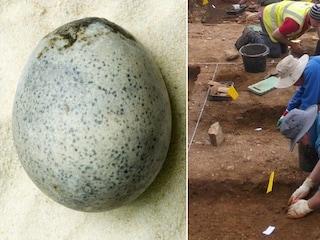 Archeologi trovano 4 rarissime uova di gallina di epoca romana ma ne rompono tre