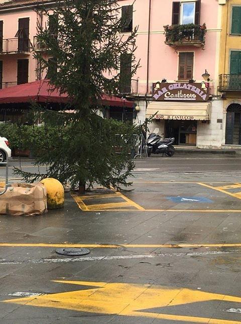 L'albero occupa interamente le strisce di carico/scarico della carrozzina, che devono rimanere libere, oltre che parte del parcheggio stesso.