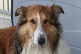 Vittorio Veneto, cane scappa di casa, lo cercano per giorni: era in obitorio dal padrone