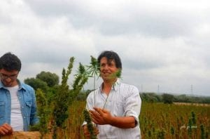 La canapa coltivata presso la masseria Fornaro