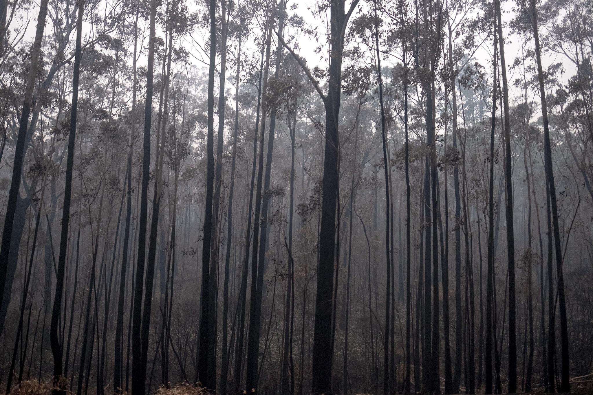 Gli incendi in Australia
