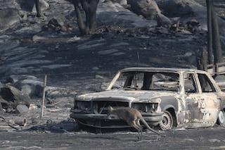 """La foto del canguro in fuga carbonizzato, simbolo dei roghi in Australia: """"Devastante scattarla"""""""