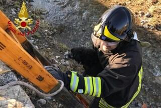 Prato, scappa dai botti di Capodanno e si perde: cagnolino salvato dai vigili del fuoco