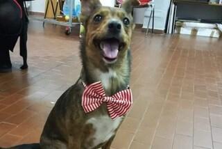 Torino, lieto fine per Shelby, scappata a Capodanno per i botti: la cagnolina è tornata a casa