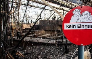Germania, lanterne cinesi lanciate per Capodanno scatenano incendio allo zoo: strage di animali