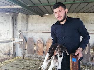 Il giovane pastore calabrese che inventa il collare anti-lupo per salvare le sue capre