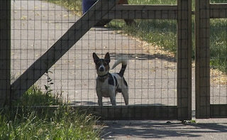 Bocconi avvelenati, esche pericolose e cani impiccati: caccia al killer di animali a Macomer