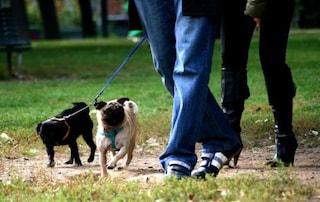Ragazzino non raccoglie cacca del suo cane. Un anziano la recupera e gliela spalma in faccia