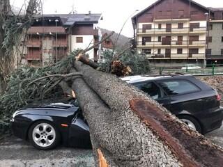 Val Susa, albero cade per il forte vento: distrugge un'auto e blocca la strada