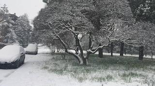 Previsioni meteo 24 marzo: è tornato l'inverno, allarme gelo per i frutteti