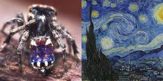 """""""Sembra un van Gogh"""": in Australia scoperto ragno che somiglia alla Notte stellata"""