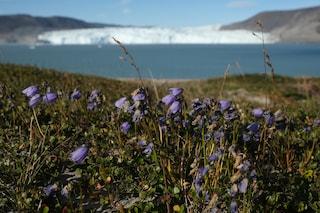 Picchi di 30 gradi all'Artico, è allarme caldo record al Polo Nord