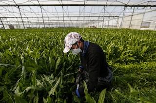 Dl rilancio, c'è sanatoria per migranti: permessi di soggiorno solo per agricoltori e badanti