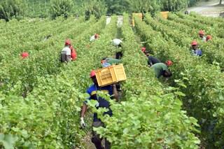 """Regolarizzazione migranti, Arci: """"Troppi lavoratori saranno esclusi, si alimenta la criminalità"""""""