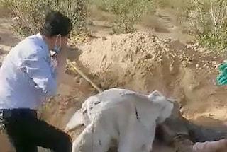 Cina, il figlio la seppellisce viva nel deserto: 79enne paralizzata sopravvive per 3 giorni