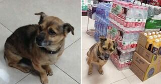 Wuhan, cane aspetta da tre mesi il padrone morto di coronavirus