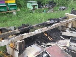 Friuli Venezia Giulia, incendio doloso a San Lorenzo Isontino: uccise due milioni di api