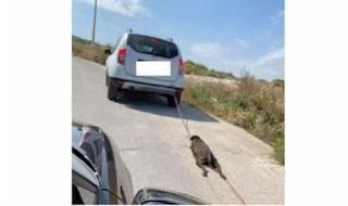 """Siracusa, cane legato a un'auto e trascinato sull'asfalto: """"Morto dopo atroci sofferenze"""""""