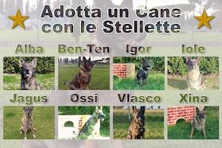 """La campagna dell'Esercito: """"Adotta un cane con le stellette, ora in pensione meritano affetto"""""""