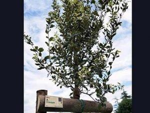 """Un albero per ogni vittima, a Firenze nasce il parco Covid: """"Li pianteremo per chi ci ha lasciato"""""""