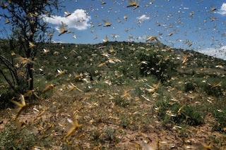 Brasile, non bastava il Coronavirus: sciame di locuste in arrivo, proclamato lo stato di emergenza