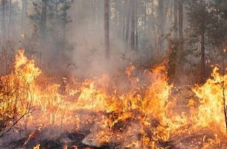 Incendio tra i boschi, sindaco di Ascoli Satriano mette taglia da 5mila euro sui piromani