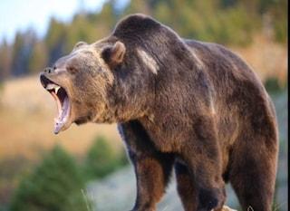 """Christian e Fabio, attaccati da un orso: """"Non uccidetelo, rispettiamo la sua vita"""""""