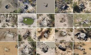 Centinaia di elefanti muoiono tutti assieme e nessuno si spiega perché