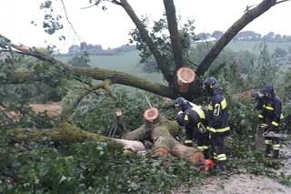 Udine, dramma nei boschi: uomo muore schiacciato dall'albero che stava tagliando