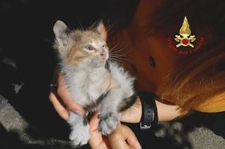 Bologna, rimane incastrato nell'auto per 40 chilometri, gattino salvato dai pompieri