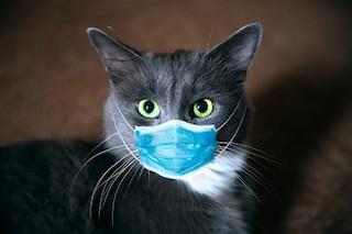 Regno Unito, gatto domestico col Coronavirus: è il primo caso