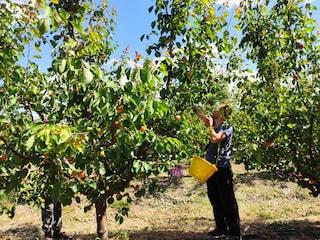 """Piccoli produttori di frutta bio sfidano la grande distribuzione: """"Davide contro Golia"""""""