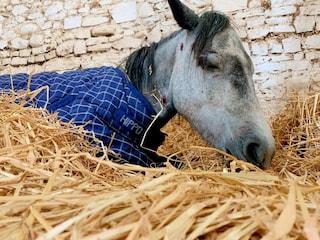 """Pony picchiato a morte da un gruppo di adolescenti, è caccia ai responsabili: """"Vogliamo giustizia"""""""