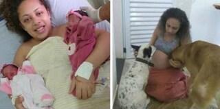 """La mamma le lascia in culla, gemelline di 26 giorni sbranate dal cane di famiglia: """"Era geloso"""""""