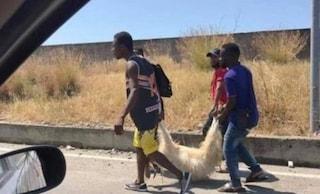 """La foto-bufala pubblicata dal senatore di FdI: """"Migranti mangiano un cane"""". Ma si tratta di un ovino"""