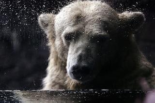"""Mai così poco ghiaccio negli oceani del Polo Nord. Gli scienziati: """"Un altro chiodo nella bara"""""""
