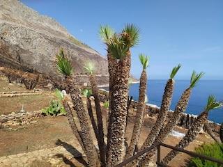 Nuova vita per la Riserva dello Zingaro dopo gli incendi, ricrescono le palme nane