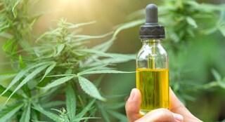 Basta corrieri per la cannabis: la circolare che rende più difficile le cure
