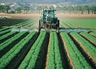 L'Italia non rispetta la direttiva sull'uso dei pesticidi: Bruxelles minaccia le vie legali
