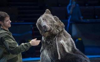 Strage di orsi in Usa, 62 esemplari uccisi in un solo giorno con archi e frecce