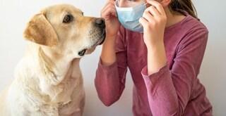 I cani per stanare il Coronavirus: in Italia (forse) già entro un mese