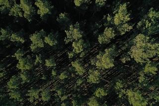 Giornata nazionale degli alberi: oggi più che mai dobbiamo imparare a rispettare la natura