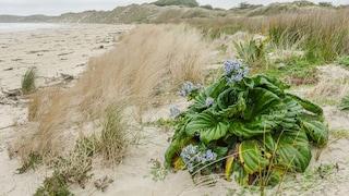 Isole Chatham, il luogo più turistico di questo 2020. 'Grazie' al Covid