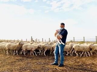 """Trapani, il pastore ha il Covid e il sindaco si prende delle sue pecore: """"Provo a dargli una mano"""""""