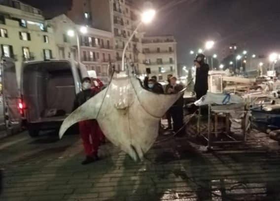 Palermo, Manta da 450 kg ripescata al porto, per portarla via una gru dei pompieri