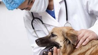 Carcasse di animali e contanti nello studio del veterinario: sequestri per 1 milione di Euro