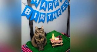 Festa di compleanno del gatto scatena focolaio covid: in Cile padrone positivo contagia altri 15