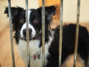 Il padrone è in carcere, cane in garage senza cibo né acqua per 14 giorni: salvato in extremis