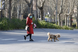 """Nell'anno del lockdown boom di adozioni di animali, Enpa: """"Piccolo miracolo della pandemia"""""""