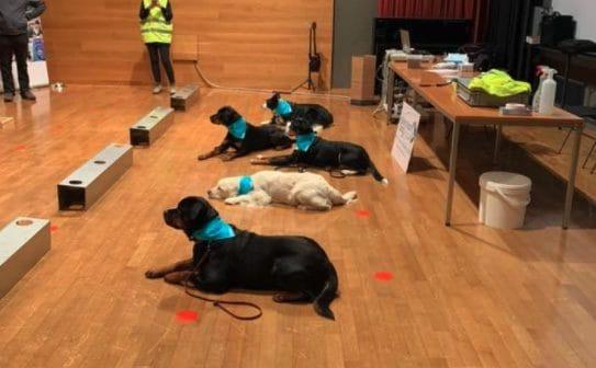 Ritorno a scuola con cani anti-Covid, gli animali in azione oggi in un liceo a Bolzano
